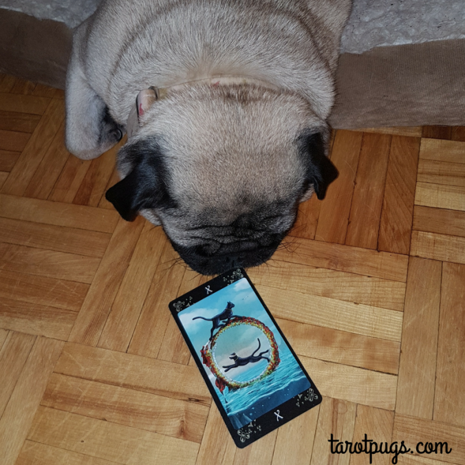 Black Cats Tarot TarotPugs Wheel of Fortune