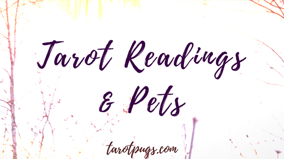 Learn how to do tarot readings for your pet.