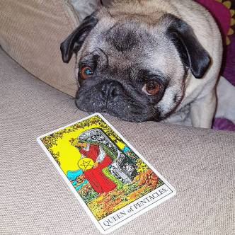 Rosie the Tarot Pug and the Queen of Pentacles
