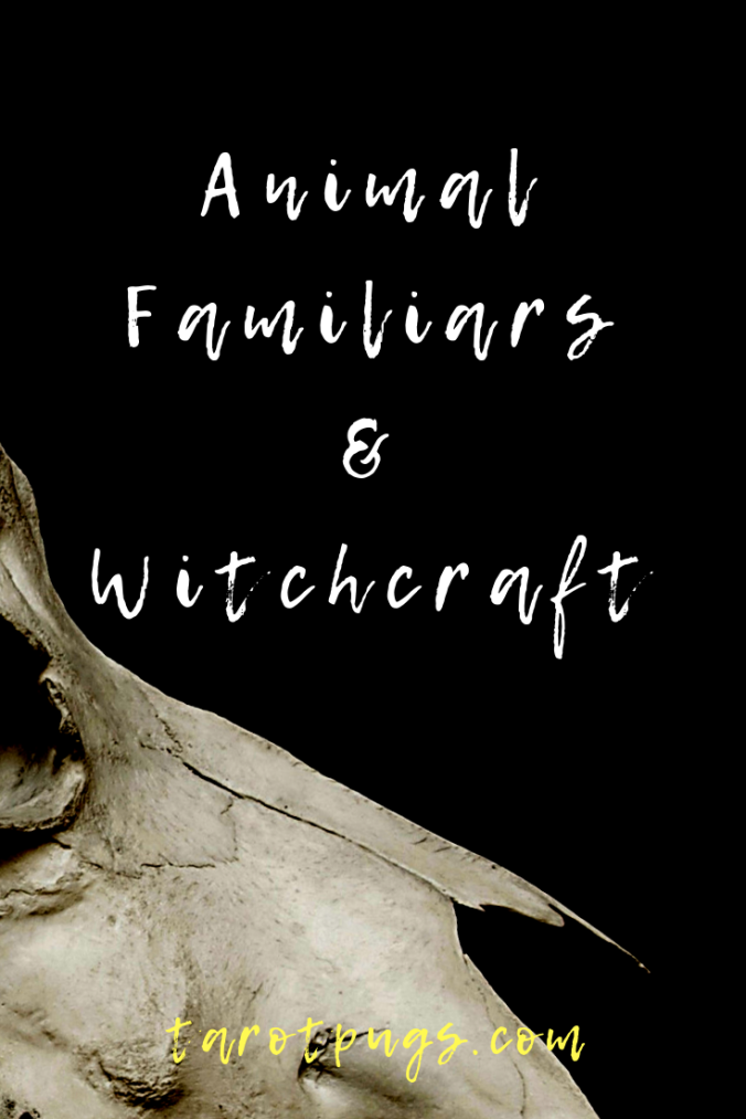 Learn how to connect and work with your animal familiars on the physical and spiritual realms. #witchcraft