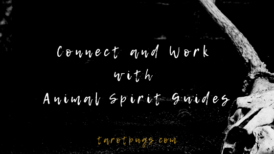 Learn how to connect and work with animal spirit guides. #witchcraft #spiritguides