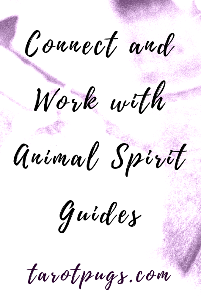 Learn how to connect and work with your animal spirit guide. #witchcraft #tarot #spiritguides #psychic