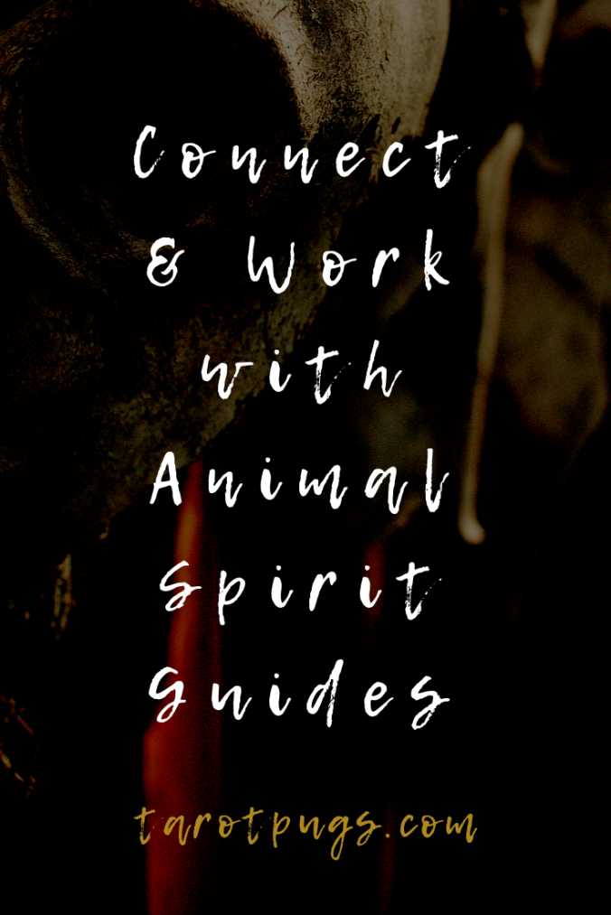 Learn how to connect and work with your animal spirit guides. #witchcraft #spiritguide