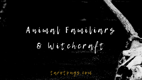 Find out how to work with your animal familiars in the physical and spiritual realms. #witchcraft