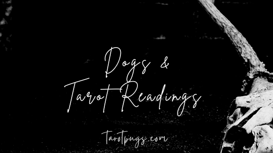 Learn how to do tarot readings for your dog.