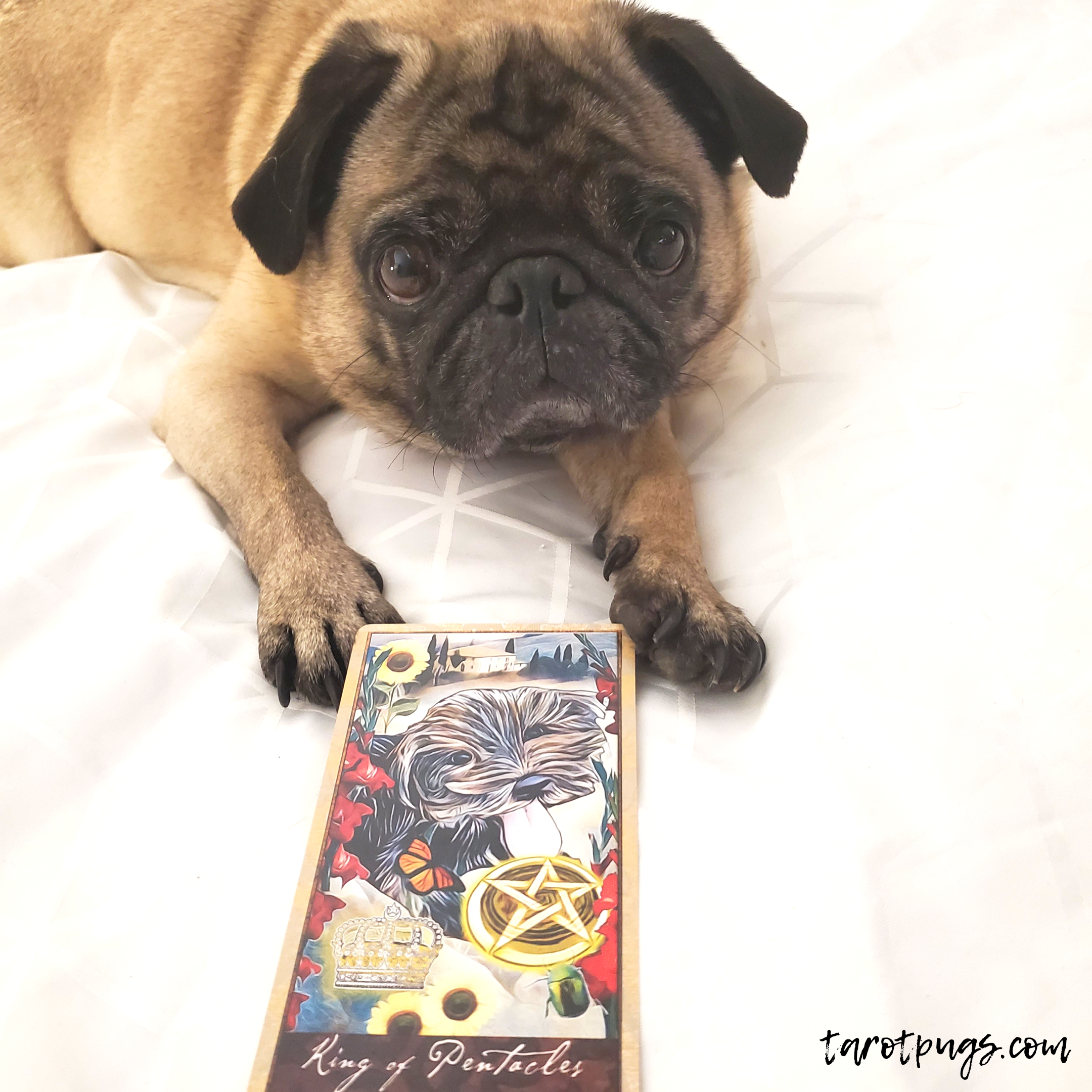 Tarot, Witchcraft and Pugs - TarotPugs