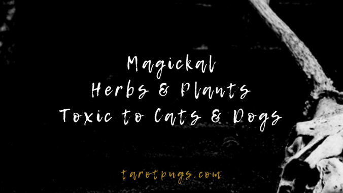 Magickal herbs and plants used in witchcraft that are toxic to cats and dogs.