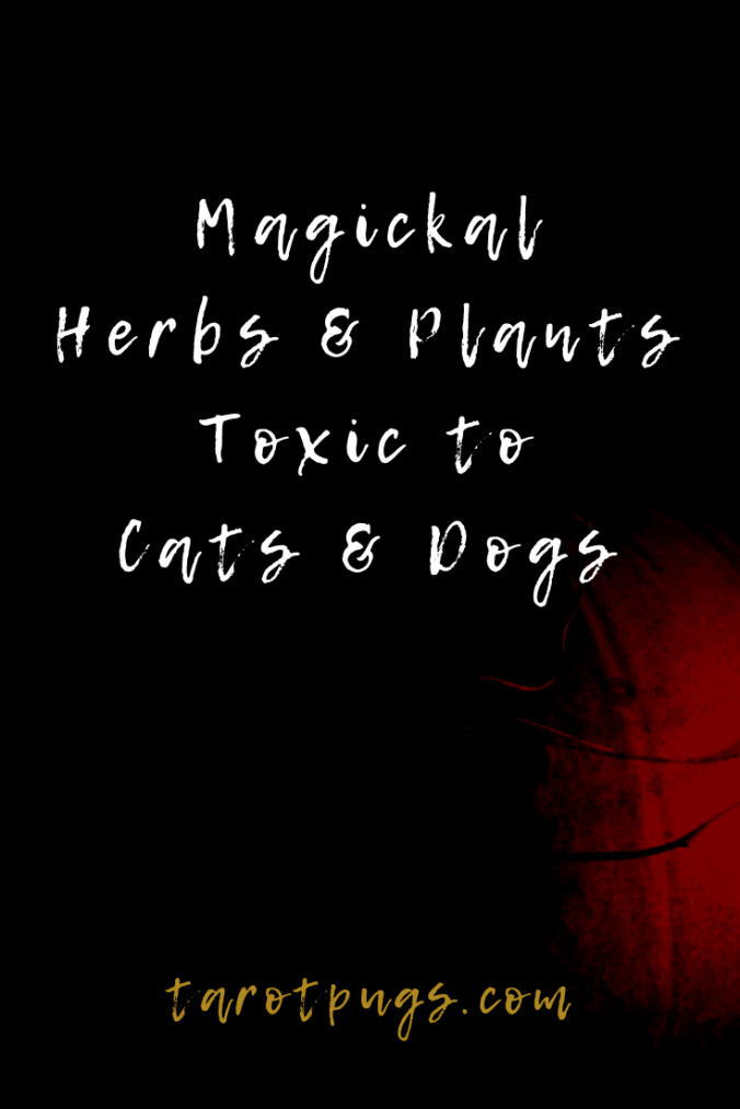 Common magickal herbs & plants that are toxic to cats and dogs - use caution when working witchcraft with these around pets.