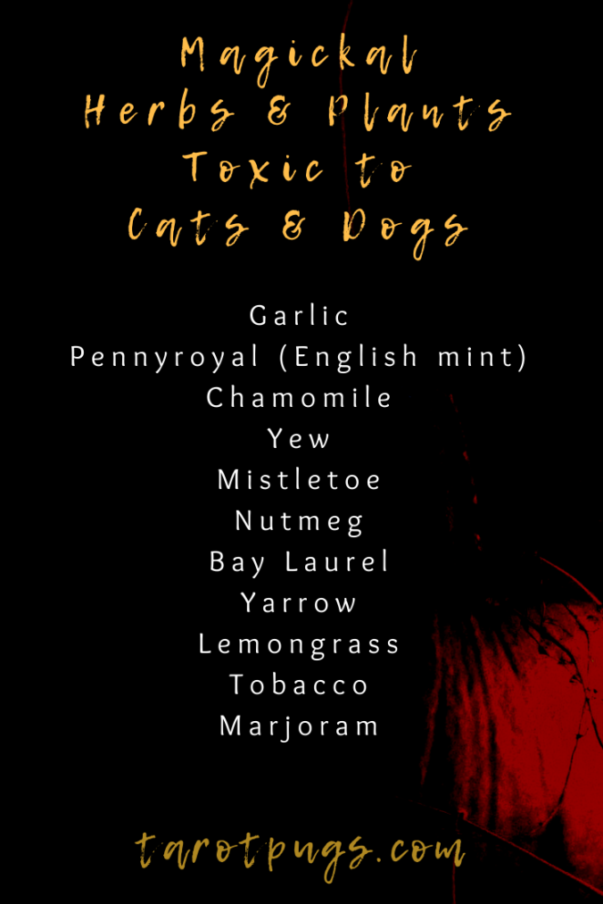 Magickal Herbs & Plants Toxic to Cats & Dogs - use caution when working witchcraft with these herbs around pets.