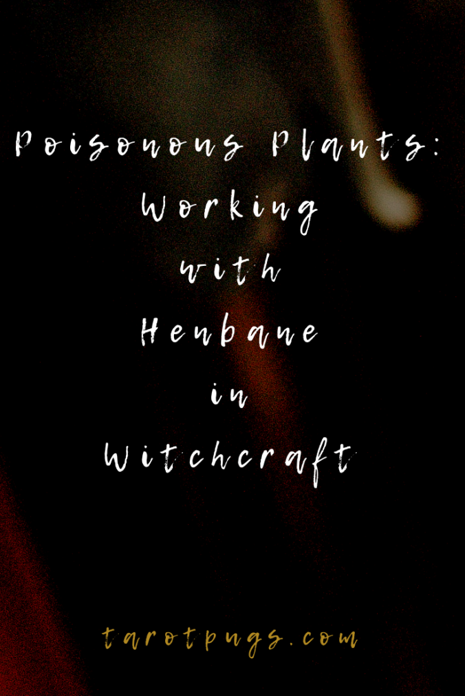 Find out about uses of the poisonous plant henbane in witchcraft. #magick #witchcraft #poisonpath