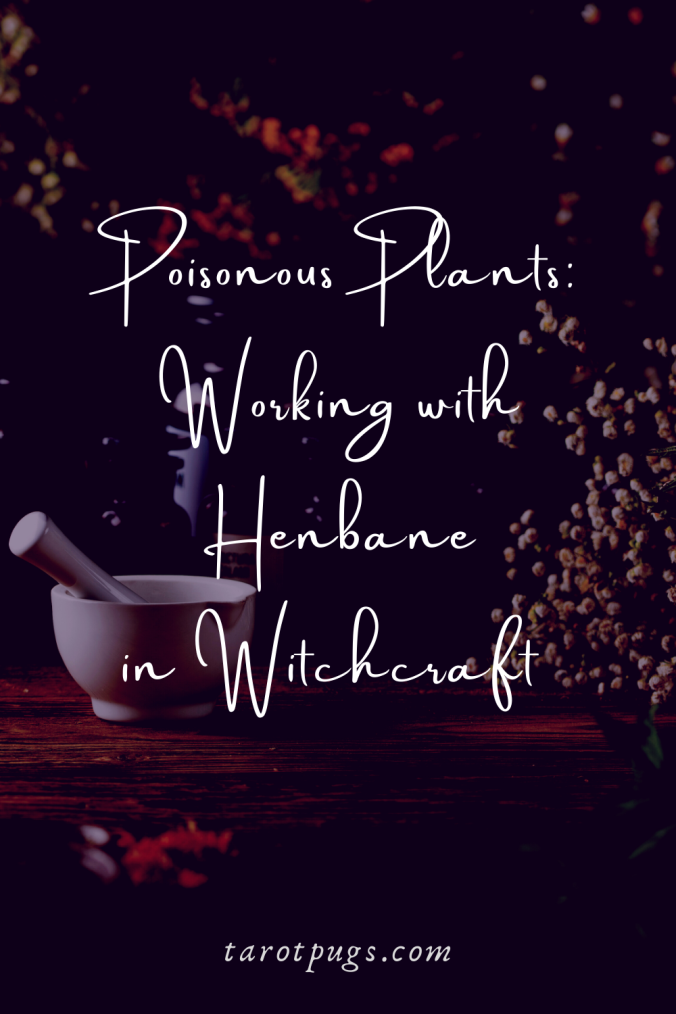 Poisonous Plants Working with Henbane in Witchcraft TarotPugs Pinterest