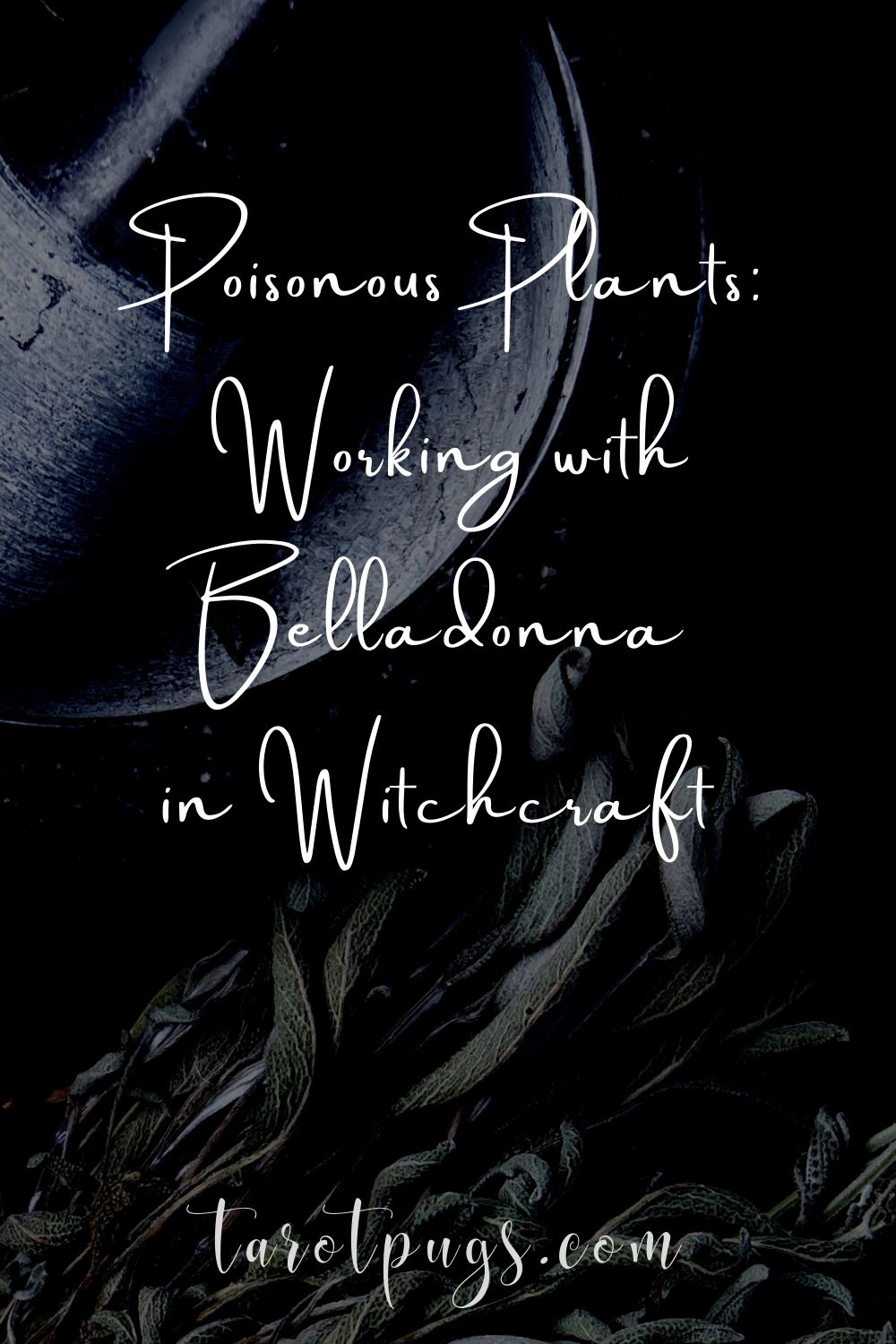 Poisonous Plants: Working with Belladonna in Witchcraft #poisonpath #witchcraft #belladonna