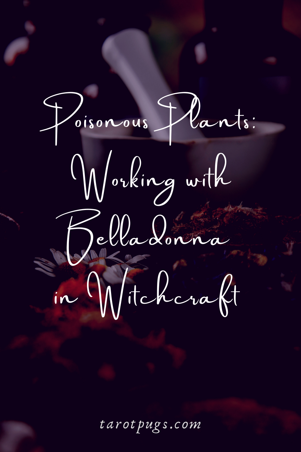 Poisonous Plants Working with Belladonna in Witchcraft TarotPugs Pinterest