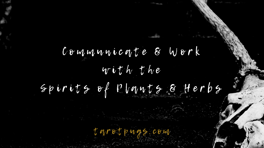 Discover how to communicate, work with and connect to spirits of plants and herbs in witchcraft, magick and for spells. #witchcraft #magick #spells #spirits #herbalism